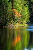 Fall's first sign by eswendel