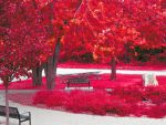 RedTrees by Madol