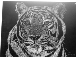Scratchboard: Bengal Tiger by PeachBerryDivision