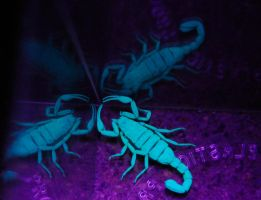 Critter glow by kayaksailor