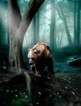 The bear. by bcamelier