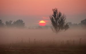 Rise Again: The Red Sun by markborbely