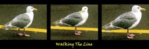 Walking The Line by Photos-By-Michelle