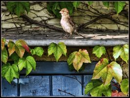 Autumn Sentinel by kanes