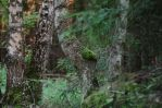 Forest Tranquility by ObservableUniverse