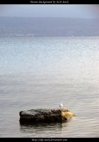 Rock and Seagul by ALP-Stock