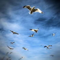 Sea Gulls by tracy-Me