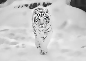 Tiger by kingwicked
