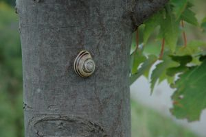 peaceful snail by treehugginhippie