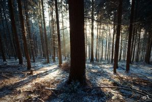 sunlight through the trees by hermik