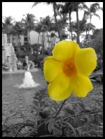 Yellow Flower BW by Wickedly-Witchy