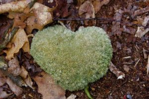 Mossy Love by GlassHouse-1