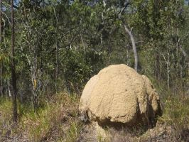 Fungi--like Termite Mound by tablelander