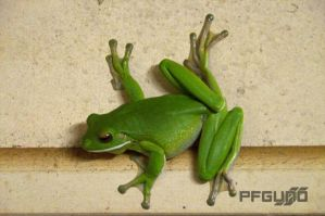 Frog On The Wall [SHOT 2] by pfgun0