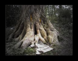 The tree that ate people by hres