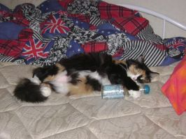 My cat and her ramune by kikyo4ever