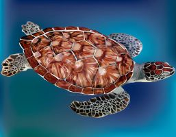 Tortuga by soul-painter