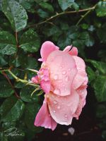 Flower and Drops by xMarieDx