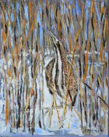 Great Bittern hiding by etp56 by TraditionalArt