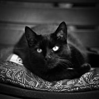 The Black Cat by DREAMCA7CHER