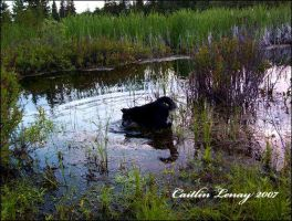 Frog Hunting by Caity-lyn