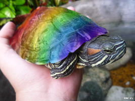 Rainbow Turtle by pink121