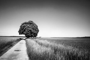 The Lonely Tree - BW - by dikoxx