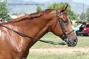 Quarter Horse Stock 92 by tragedyseen