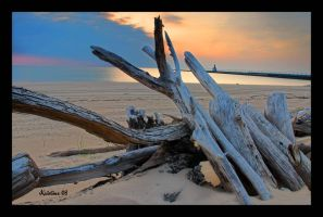 Driftwood View by SandDollar71