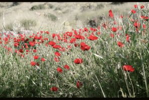 Poppies by valiunic