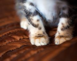 Little paws by juhku