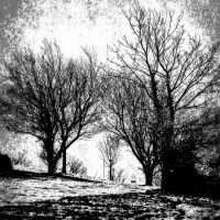 Black and White Snow Trees by basement-ghost