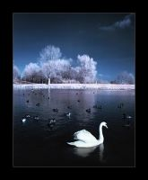 The Swan 2 by densss