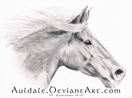 A friends horse by Auldale