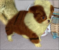 Realistic growlithe by DrCthulhu