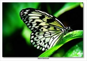 Butterfly XIII by ScoobyUSA