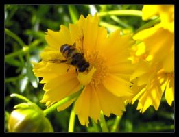 Busy bee 2 by 99-in-the-shade
