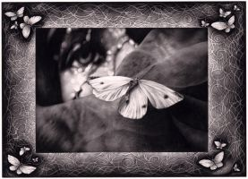 The memories of a butterfly by AnaMariaMaxim