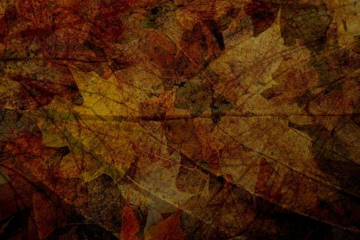 Fall Time 3 by Inthename-Stock