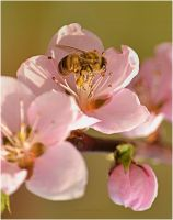 Nectarine and insect-serial 2 by sonafoitova