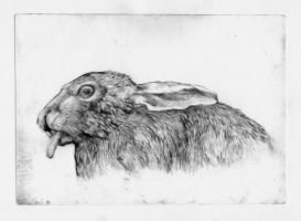 Hare - Dry Point by SilentIvo
