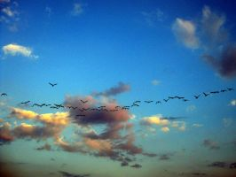 Birds by MusicDefined