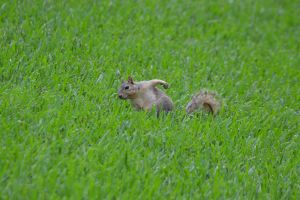 Nice squirrel for birthday of cousin Joris by A1Z2E3R