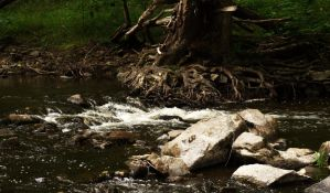 Roots by the riverside by xSunnyCloudx