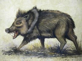 Perturbed Peccary by HouseofChabrier