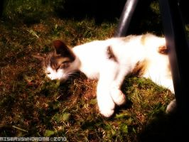 Sleeping in the sun by MiserySyndromex3