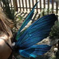 BEATLE faery wings by S0WIL0