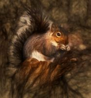 Squirrely by TSWright