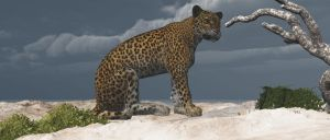 Leopard2 by fractal2cry
