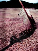Feather in the Sand by izzybizy